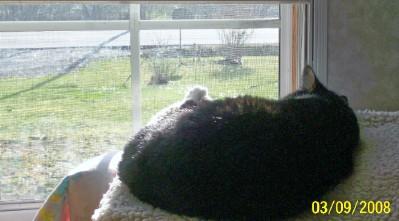 Cleo sunning